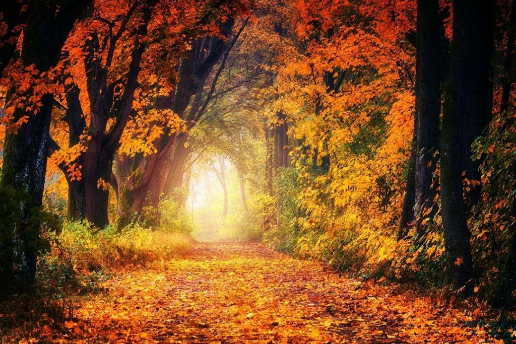 Autumn on my mind…